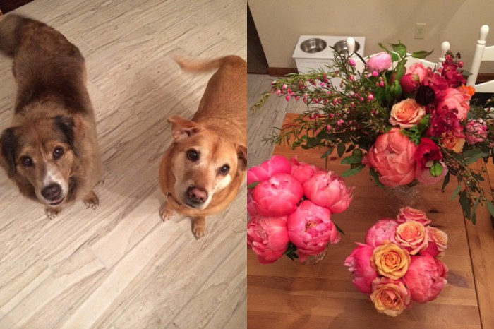 Puppies and pretty flowers...my two faves.