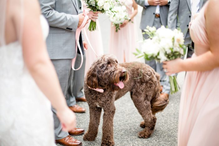 Dogs at Weddings: Blush Pink Outdoor Wedding at the Allegheny County Courthouse from Jenna Hidinger Photography featured on Burgh Brides