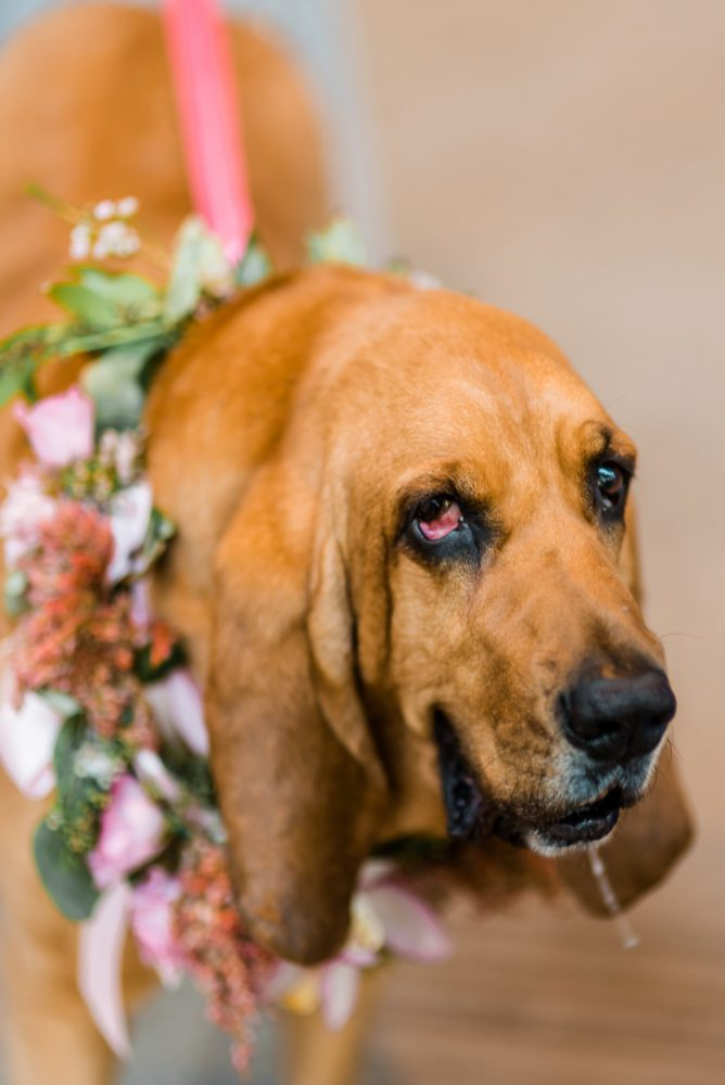 Wedding Dogs: Fun Whimsical Wedding from Sky's the Limit Photography featured on Burgh Brides