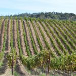 Planning Your Sonoma Wine Country Honeymoon with The Wine Road featured on Burgh Brides