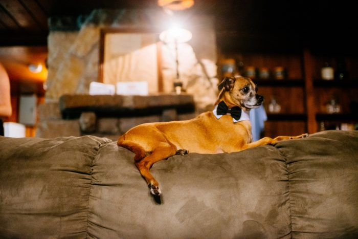 Dogs at Wedding: Shades of Blue Wedding at Fernstone Retreat from The Oberports and Olive & Rose Events featured on Burgh Brides