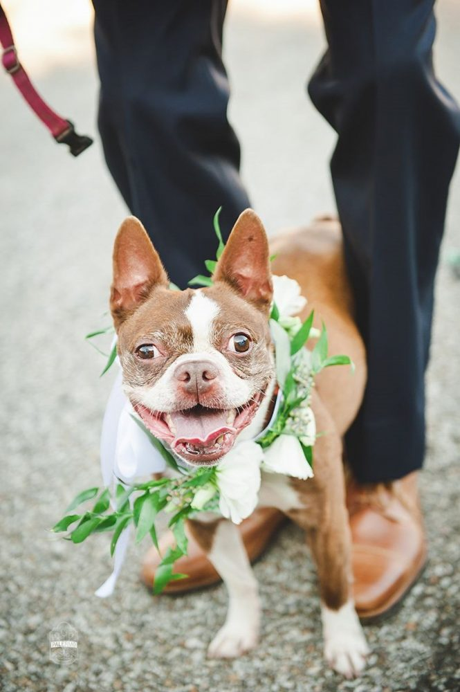 Floral Collar for Dog at Wedding: Modern Garden Inspired Wedding at the Pittsburgh Golf Club from Palermo Photography featured on Burgh Brides
