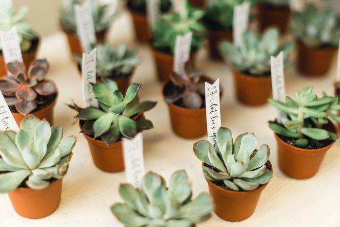 Succulent Escort Cards: Whimsical Greenhouse Wedding at Quality Gardens from Dawn Derbyshire Photography featured on Burgh Brides